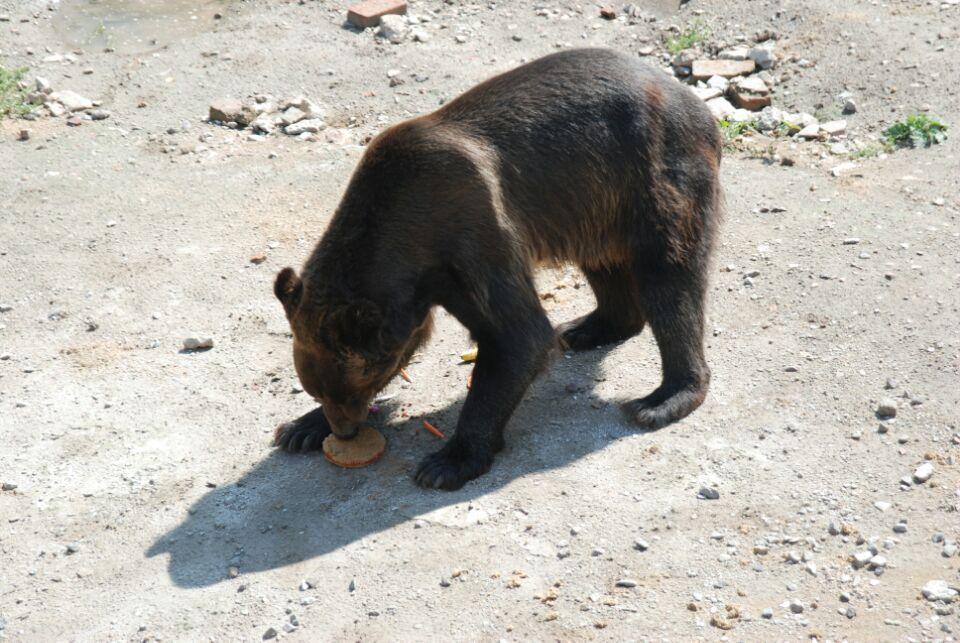 北方森林动物园为动物们准备了月饼为